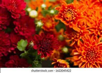 Vibrant & Beautiful Summer/Fall Mums