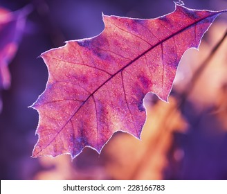 Vibrant and bright autumn leaf in the sun rays of early winter morning.