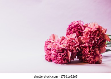 Vibrant carnations on a pink mauve background, perfect for greeting cards