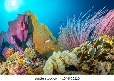 Vibrant colorful healthy reef system