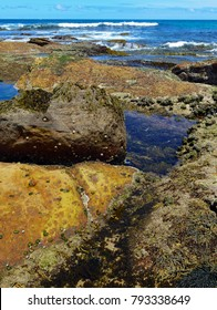 Vibrant colors of aquatic life in rock pools and the tidal zone of rocky coastline beach in Australia