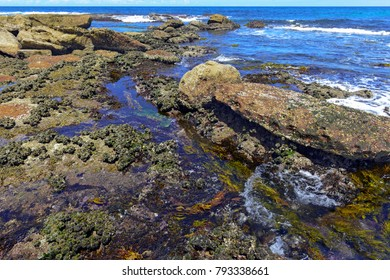Vibrant colors of aquatic life in rock pools and the tidal zone of rocky coastline beach in Australia