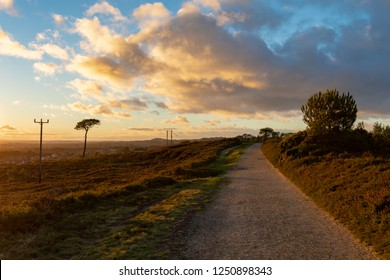 Vibrant colour landscape photograph taken on Canford heath nature reserve looking down public bridleway during the golden hour.