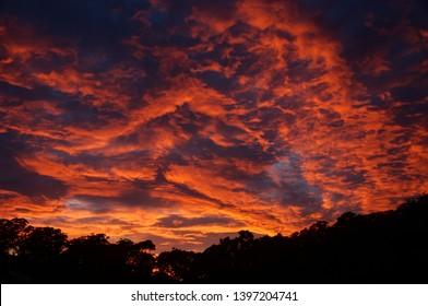 A vibrant dramatic crimson coloured stratocumulus cloudy sunrise landscape with a tree silhouette horizon. Gosford, New South Wales, Australia.