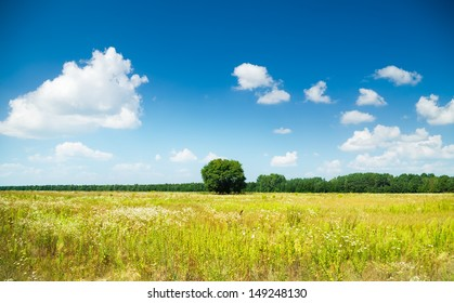 Vibrant field of wildflowers and forest