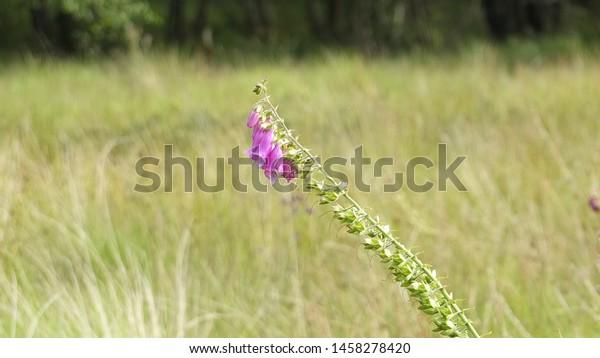 Vibrant flowers growing in a field.