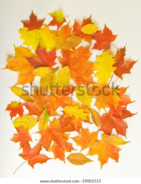 vibrant foliage