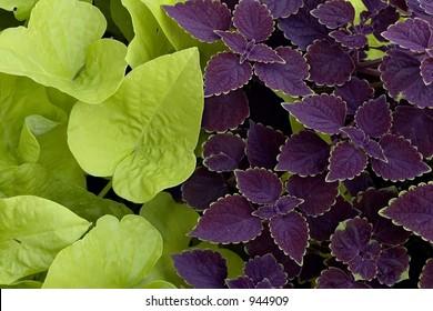 Vibrant Garden Plants