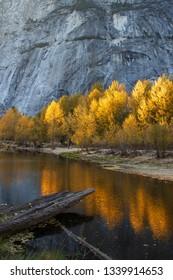 Vibrant golden sunlit trees reflected in water below rockface