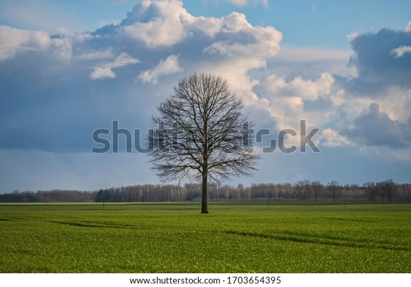 Vibrant green agriculture field with beautiful blue after rain sky during early spring day / Lonely tree in the middle