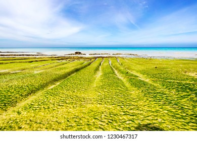 Vibrant green algae formation on the rocks of Andaman Nicobar beach shot in a low angle with white sandy beach and vibrant blue sky in back ground