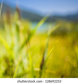 Vibrant Green Background Composed of Blurred Reed Laves in front of an Alpine Horizon