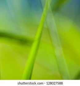 Vibrant Green Background Made from Blurred Reed Laves