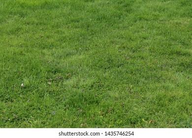 Vibrant green grass texture background during summer