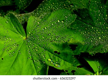 Vibrant Green Leaf covered with small rain drops