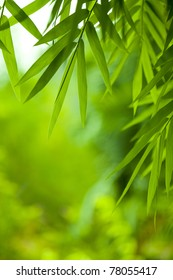 Vibrant, green leaves - soft focus