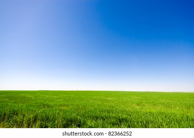 Vibrant green meadow under a blue sky