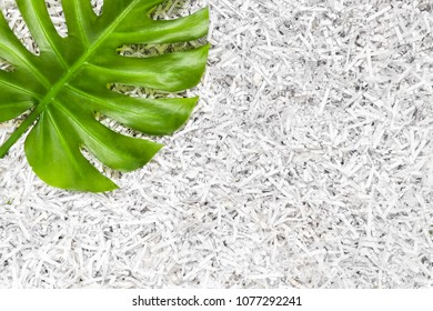 Vibrant green Monstera leaf in a heap of shredded paper. Recycling concept.