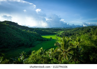 Vibrant green tropical valley with rice field and farmland - Panay, Philippines
