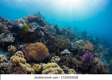 Vibrant and healthy coral reef ecosystem in the crystal clear waters of Raja Ampat, Indonesia.