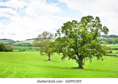 A vibrant landscape image in Northumberland, UK