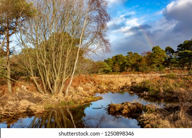 Vibrant landscape photograph taken on Canford heath nature reserve with sunlit foreground and cloudy background with rainbow.