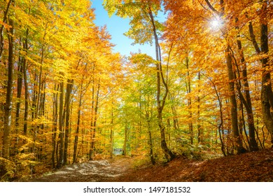 Vibrant morning scene in the forest with sun rays and colorful leaves on trees, autumnal landscape