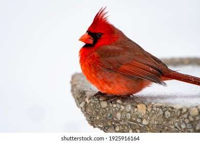 Vibrant Northern Cardinal on Bird Bath Against Snowy Background