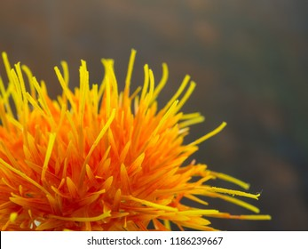 A vibrant orange flower called a Safflower. The sienctific name is Carthamus tinctorius. Macro image with copy space.