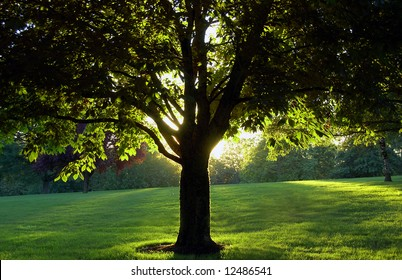 Vibrant Park Scene with Backlit Tree
