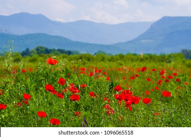 Vibrant poppy field panorama with mountain and white clouds in the background