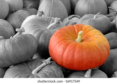 A Vibrant pumpkin on top of a heap of black-and-white ones
