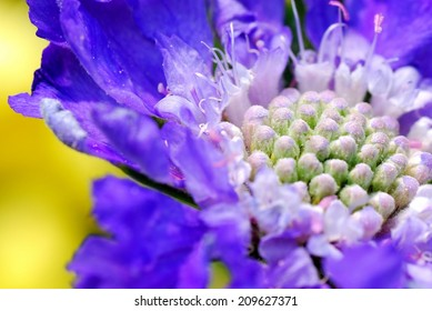 Vibrant Purple, Fuzzy Flower Against Beautiful Yellow Background