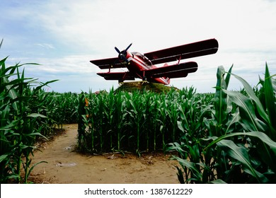Vibrant red biplane in a cornfield.