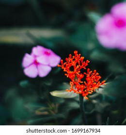 A vibrant red plant ina a house garden.