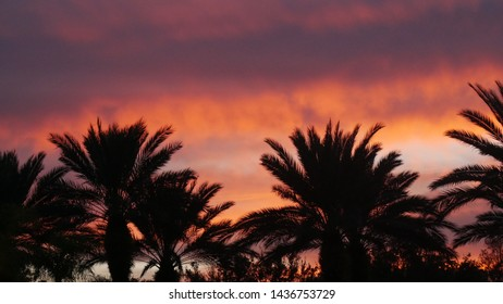 Vibrant red and yellow evening sky over palm trees