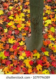 Vibrant red and yellow leaves at the base of a tree in northern Illinois