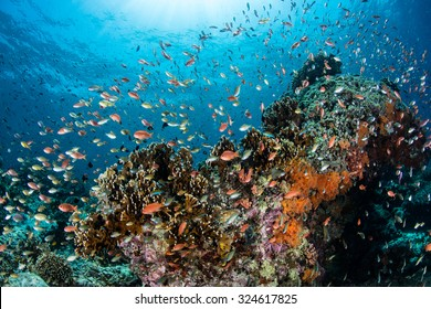Vibrant reef fish feed on plankton above a coral reef in Indonesia. This area harbors extraordinary marine biodiversity and is a popular destination for divers and snorkelers.