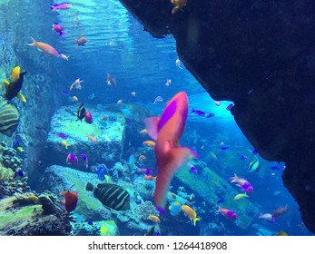 Vibrant schools of fish coexisting together under the sea.