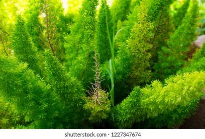 Vibrant Small Evergreen Plant