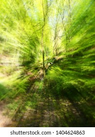 vibrant spring green abstract zoom blur of woodland trees and leaves