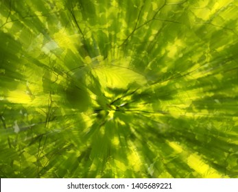 vibrant spring green abstract zoom blur of woodland tree and leaves