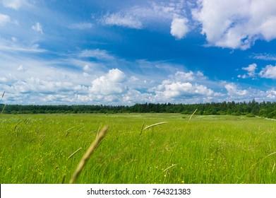 Vibrant Springtime Field Freedom