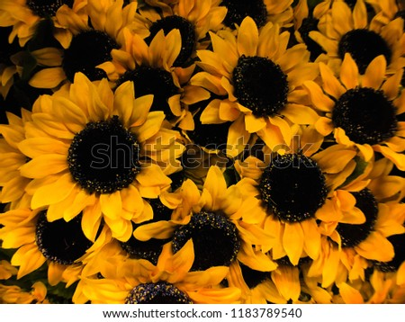 Vibrant Sunflowers For Home Decor This Can Be A Thumbnail Or Texture