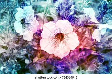Vibrant toned flowers in the garden. Background for scrapbooking
