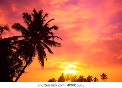 Vibrant tropical sunrise with palm trees silhouettes