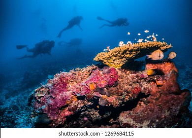 Vibrant underwater scuba diving scene. Colourful coral structure in the foreground surrounded by small tropical fish with silhouttes of a group of scuba divers swimming above in the background