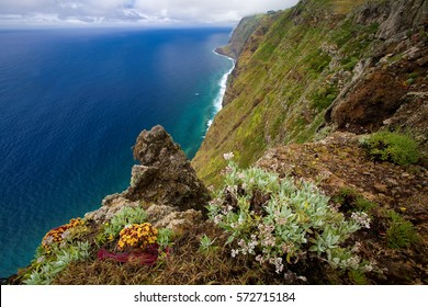 Vibrant view on steep cliff coast of Ponta do Pargo, Madeira island with succulents in blossom. Nature scenery of seascape costal shoreline landscape near Ponta do Pargo, Madeira, Portugal.
