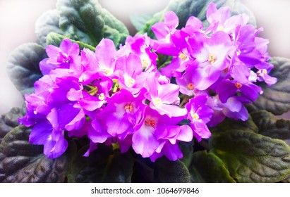 Vibrant violets on window flower background hd