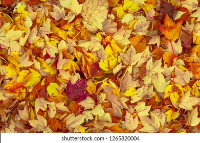 Vibrant vivid colors of fall